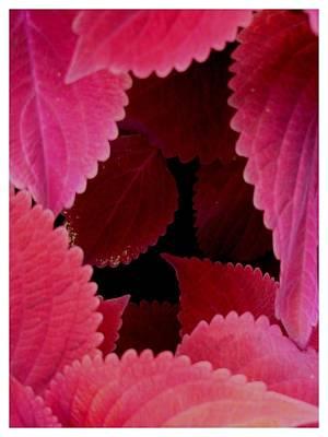 Photograph - An Innner Sanctum Of Red by Frank Wickham