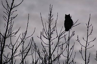Sillouette Photograph - An Owl Silhouette by Christy Patino