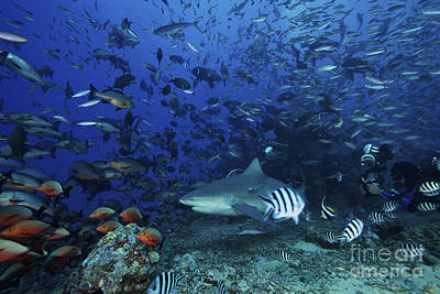 Videographer Photograph - An Underwater Photographer Films by Terry Moore