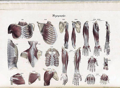 Photograph - Anatomie Methodique Illustrations by Science Source