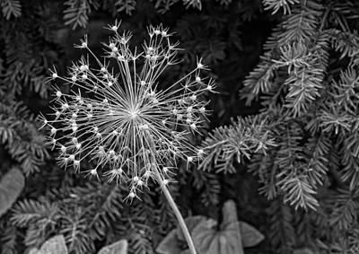 Skelton Photograph - Anatomy Of A Flower Monochrome by Steve Harrington