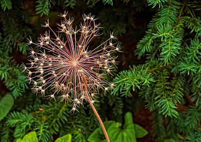 Skelton Photograph - Anatomy Of A Flower by Steve Harrington