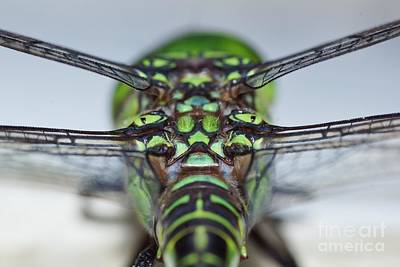 Photograph - Anatomy Of Flight by Lynda Dawson-Youngclaus