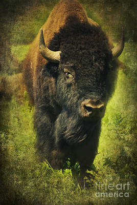 Ancient Bison Art Print by Iris Greenwell