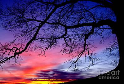 Webster County Photograph - Ancient Oak Sunrise by Thomas R Fletcher