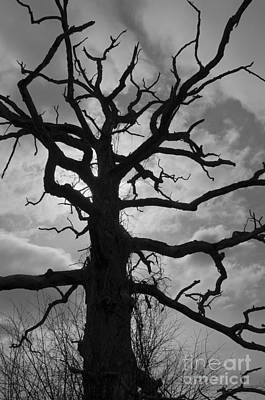Photograph - Ancient Oak Tree No. 4 by David Gordon