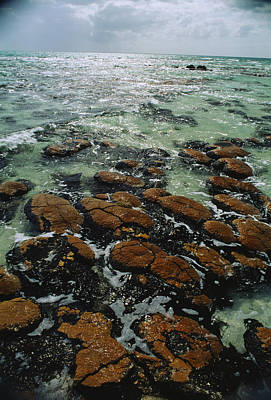 Ancient Stromatolite Reefs Still Art Print by O. Louis Mazzatenta