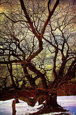 Photograph - Ancient Winter Tree by Chris Lord