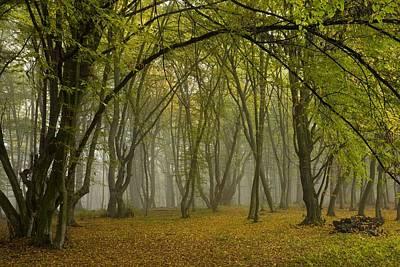 Pasture Woodland Photograph - Ancient Wood Pasture by Bob Gibbons