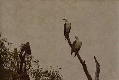 Eagle Photograph - And Baby Makes Three by Douglas Barnard