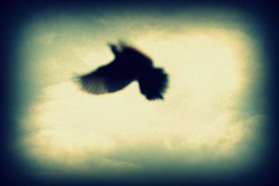 To Heal Photograph - And Still I Fly by Deborah Hall Barry