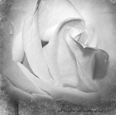 Photograph - And The White Rose Breathes Of Love by Fiona Messenger