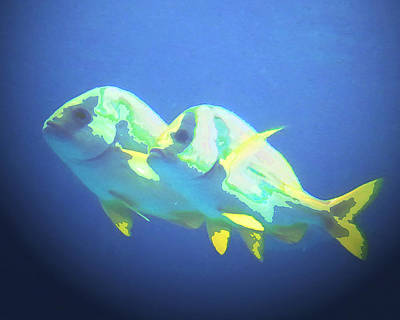 Photograph - And They Call It Fishy Love by Steve Sperry