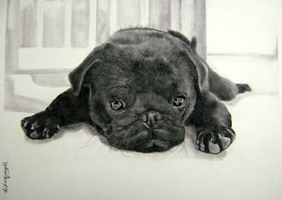 Drawing - Andy's Puppy by Mickey Raina