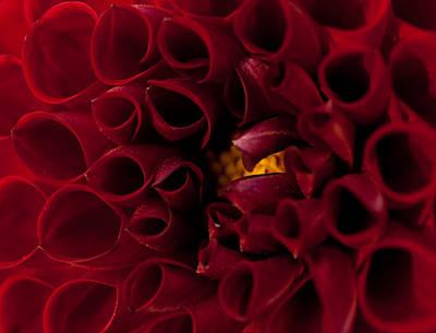 Anemone Art Print by Shannon Workman