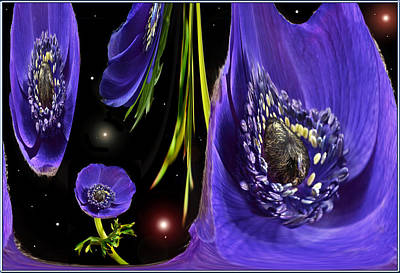 Photograph - Anemone World by Terence Davis