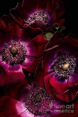 Anemones Art Print by Ann Garrett