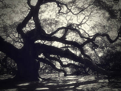 Angel Oak Photograph - Angel by Amy Tyler