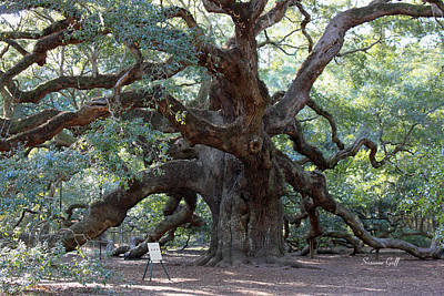 Photograph - Angel Oak - Dont Climb Or Carve On The Tree by Suzanne Gaff