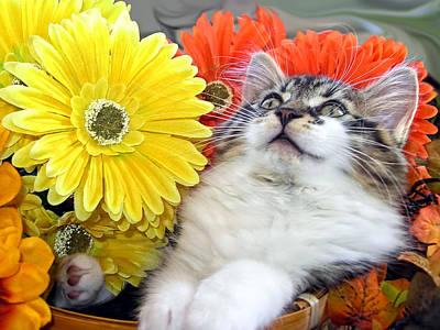 Lolcat Photograph - Angelic Kitten With Head Upwards - Curious Kitty Cat In Gerbera Flower Basket - Thanksgiving Season by Chantal PhotoPix