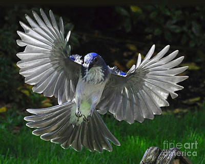Photograph - Angelic Landing by Jack Moskovita