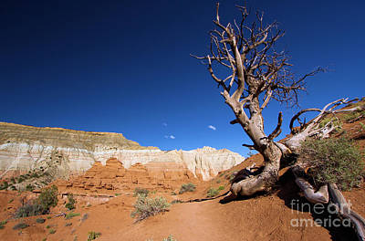 Photograph - Angels Palace At Kodachrome Basin State Park - Utah by Adam Jewell