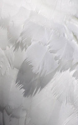 Photograph - Angels Wing by Cathie Douglas