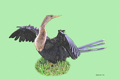 Photograph - Anhinga Female by T Guy Spencer