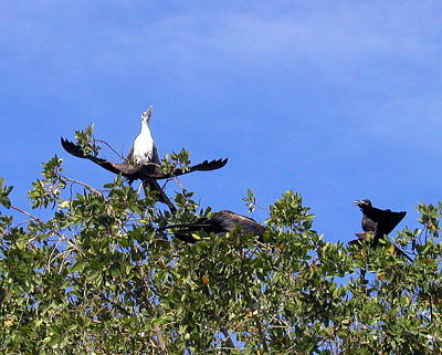 Photograph - Anhingas Of Puerto Vallarta by Cindy Wright