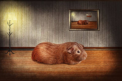 Room Photograph - Animal - The Guinea Pig by Mike Savad