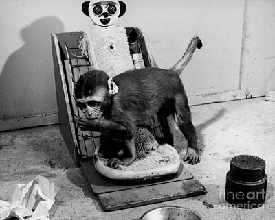 Animal Research Art Print by Photo Researchers, Inc.