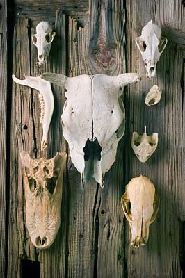 Animal Skulls Art Print by Garry Gay