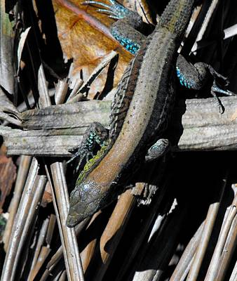 Photograph - Animals - Lizard Or Stick Is Your Call by William OBrien