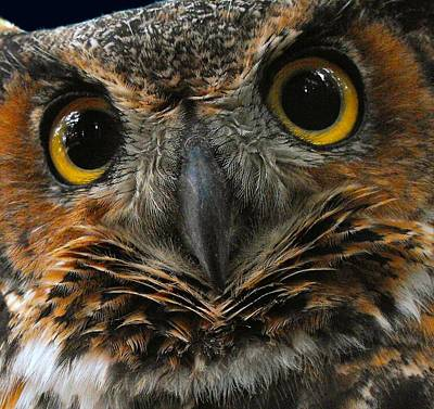 Photograph - Animals Owl With A Scowl by William OBrien