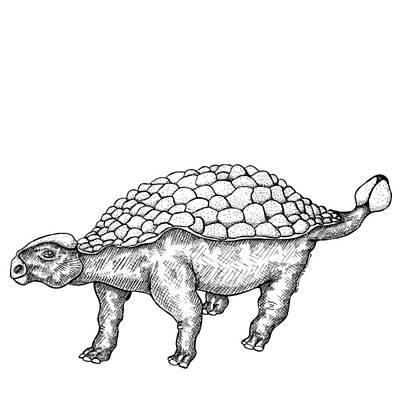 Ankylosaurus - Dinosaur Art Print by Karl Addison