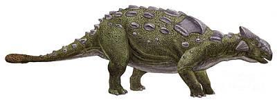 Ankylosaurus Magniventris Print by Sergey Krasovskiy
