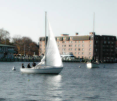 Photograph - Annapolis Sail Boat by Marilyn Marchant