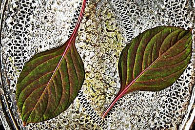 Photograph - Annual Foliage  by Chris Berry
