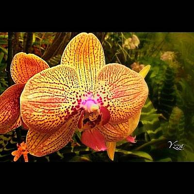 Orchids Photograph - Another #orchid by Yzza Sebastian