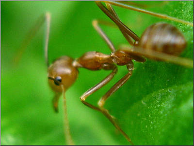 Photograph - Ant2 by Glenn Bautista