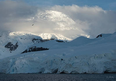 Photograph - Antarctic No. 8 by Joe Bonita