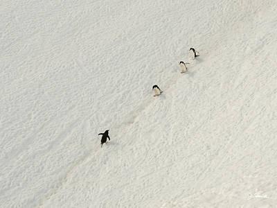 Photograph - Antarctic No. 9 by Joe Bonita
