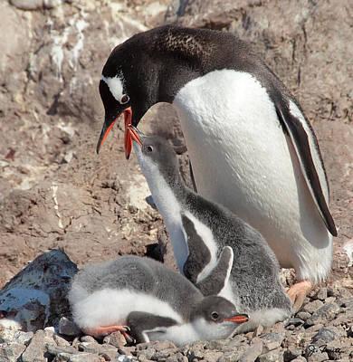 Photograph - Antarctica No. 14 by Joe Bonita