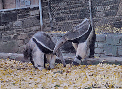 Photograph - Anteaters by Donna Brown