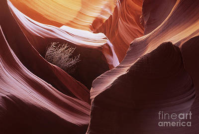 Photograph - Antelope Canyon Magic Of Light by Bob Christopher