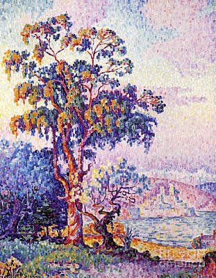 Painting - Antibes Eucalyptus Tree by Pg Reproductions