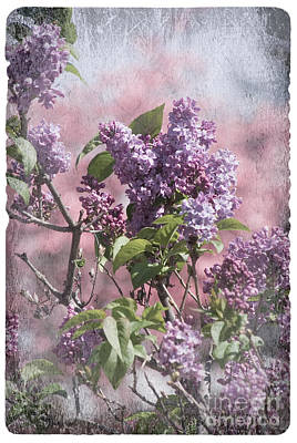 Photograph - Antique Lilac And Dogwoods by Jim And Emily Bush