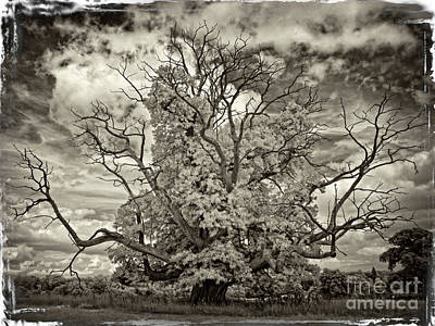 Antique Oak - Infrared Photography Art Print