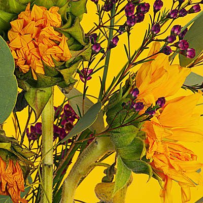 Antique Sunflower Art Print by Michelle Armstrong