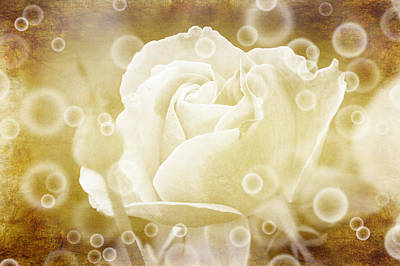 Antiqued Rose And Bubbles Art Print